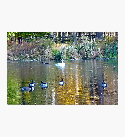 Loantaka Pond, Morristown, NJ Photographic Print
