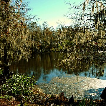 Louisiana Bayou  by SueAnne