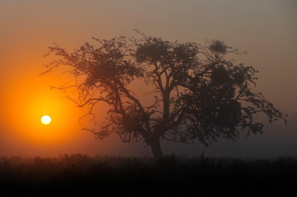 Bushy Park Sunrise by Kasia Nowak