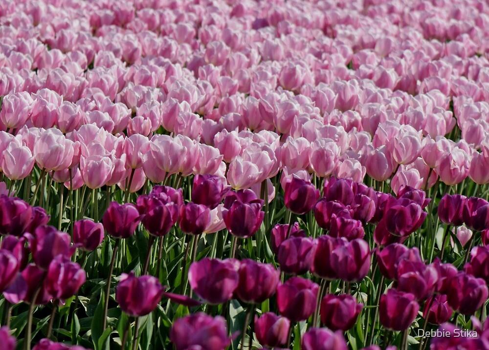 Purples And Pinks by Debbie Stika