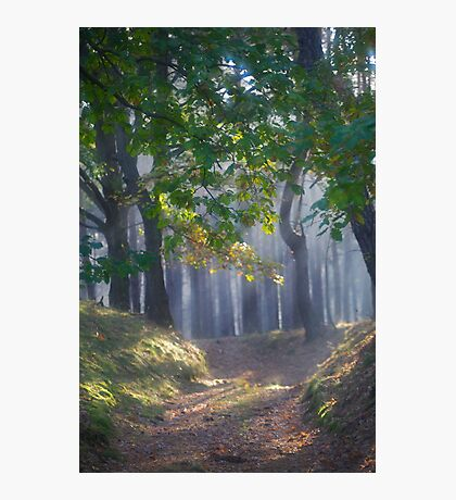601. ##### MIRACLE FOREST LANDSCAPE . by Brown Sugar . Favorites: 9 Views: 601.  thank you ! Photographic Print