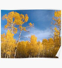 Evening in Aspens Poster