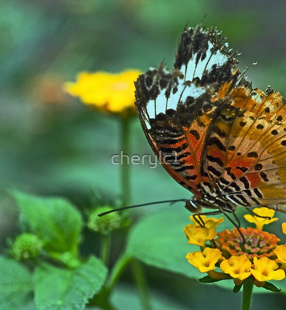 Lady Lacewing by cherylc1