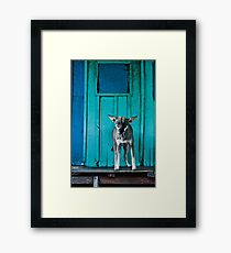 Dog in the fishermen's village Framed Print