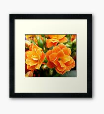 Orange,Orange and more Orange Framed Print