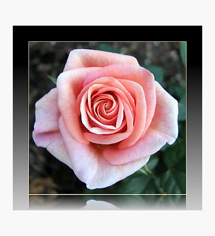 Sweet Serenity - Pink Rose in Reflection Frame Photographic Print