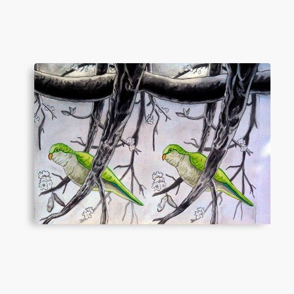 Stereogram challenge of Lorenzo the parakeet, Ibiza Canvas Print