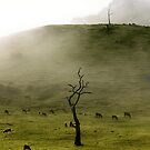 Early Morning Gumeracha, Adelaide Hills by Gerijuliaj