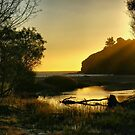 Muir Beach by Barbara  Brown