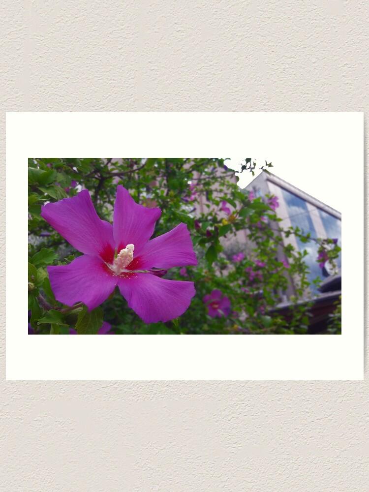Alternate view of Purple Hibiscus Art Print