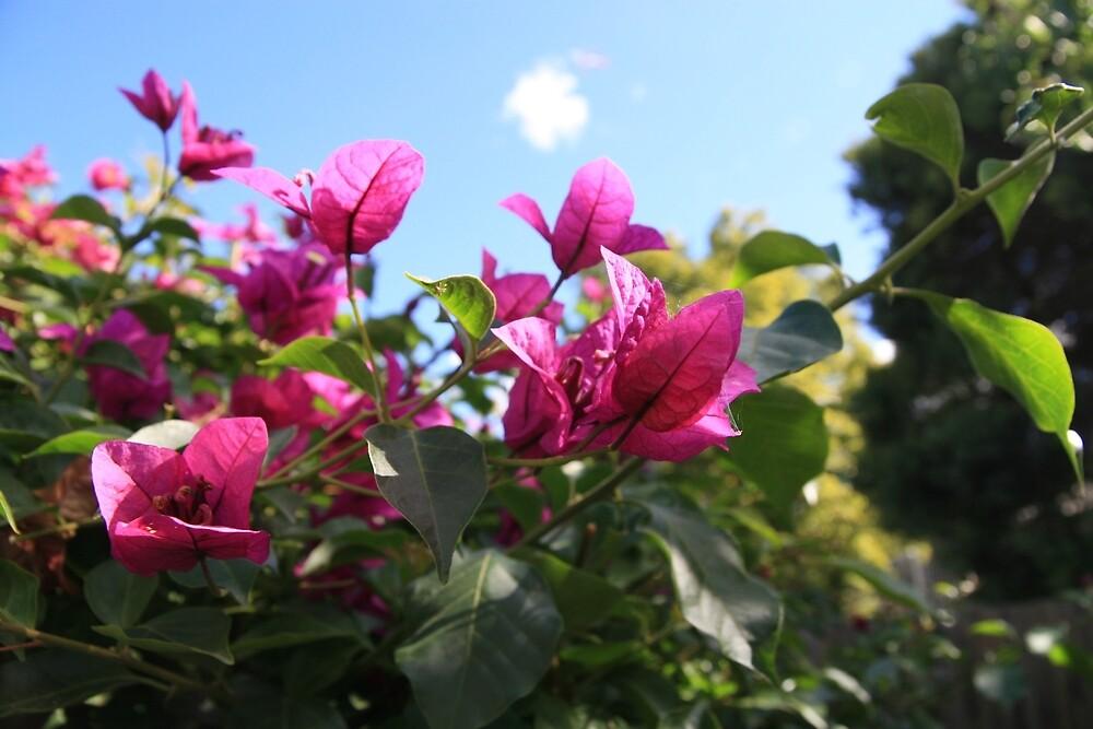 Pink Flowers, Blue Sky  by m-milisavljevic