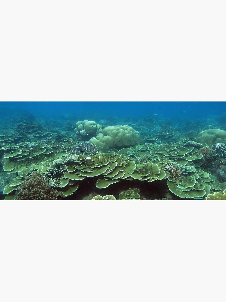 Reef at Pulau Pisang by neoniphon