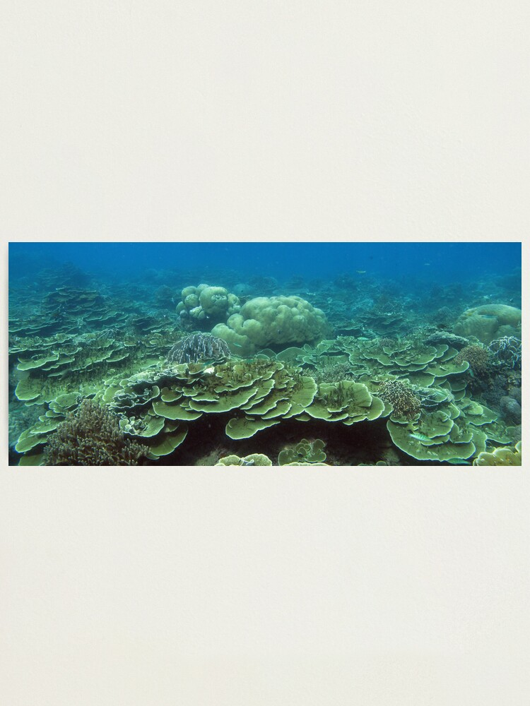 Alternate view of Reef at Pulau Pisang Photographic Print