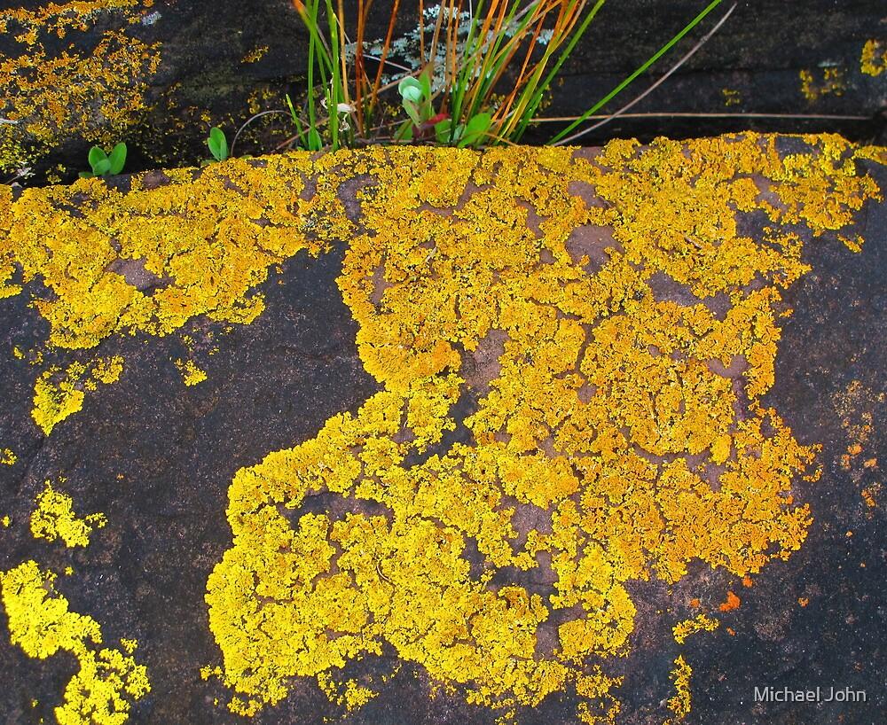 Yellow Lichen by Michael John