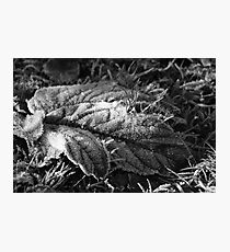 Winter's Touch Photographic Print