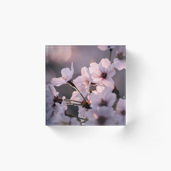 Sakura - Lumière et transparence Bloc acrylique