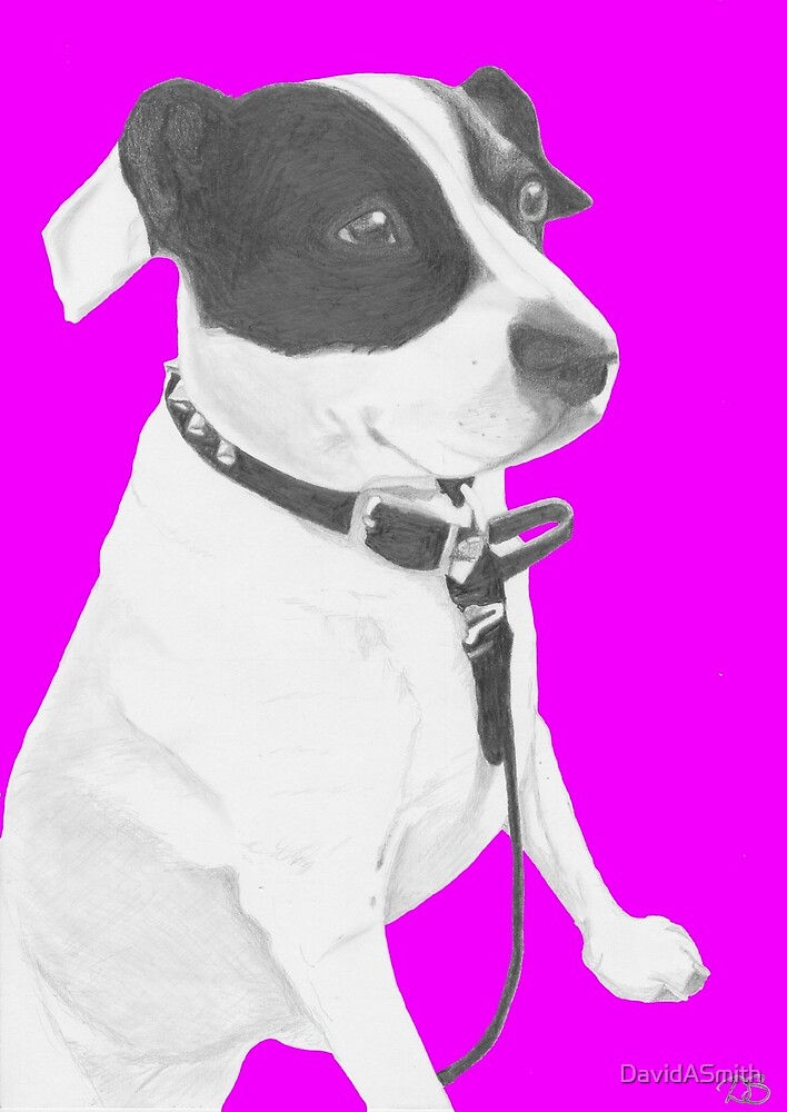 Jack Russell Crossbreed in Pink by DavidASmith