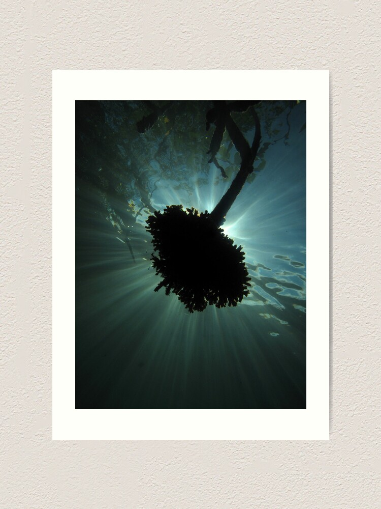 Alternate view of Mangrove Coral Halo Art Print