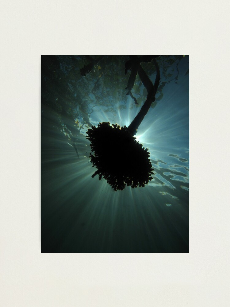 Alternate view of Mangrove Coral Halo Photographic Print