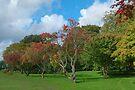 Trees Sophia Gardens, Cardiff by Artberry