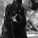 Doorstep Chicken by sammythor