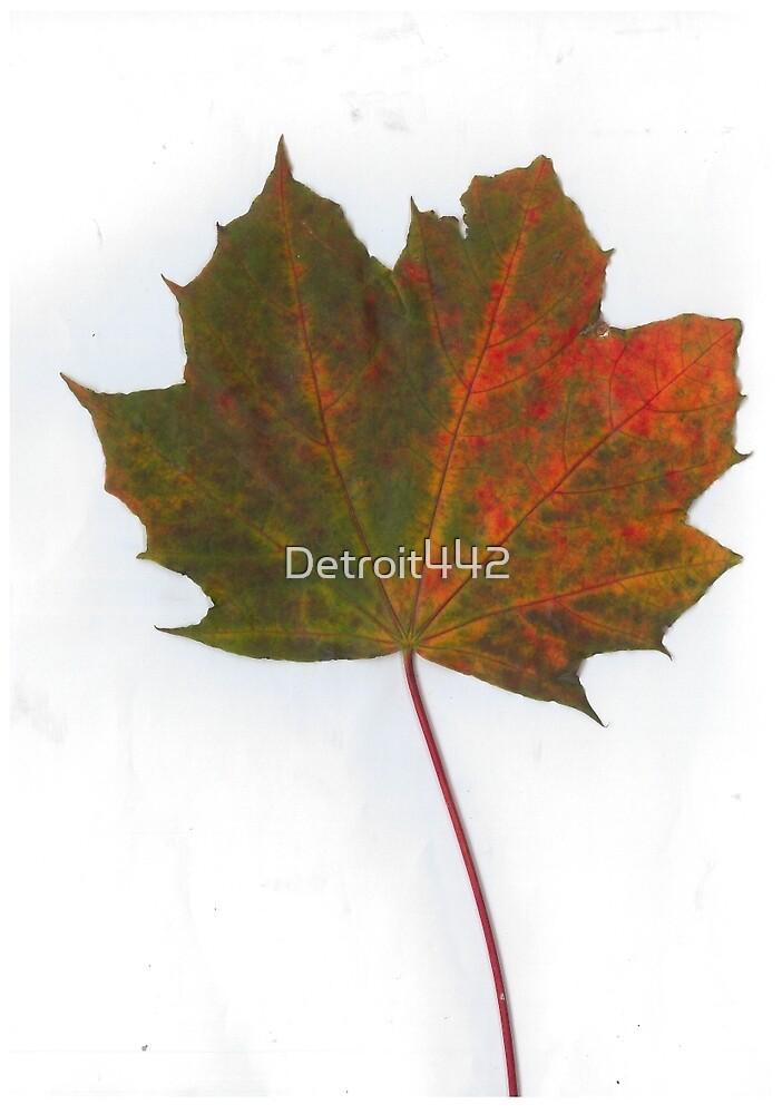 Autumn Leaf by Detroit442