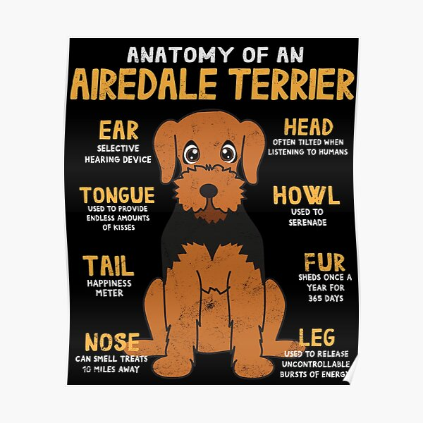 Anatomy of Airdale Terrier Dog Poster