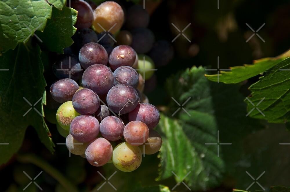 Fruit of the Vine by SusanAdey