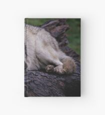 A wolf on a wet log Hardcover Journal