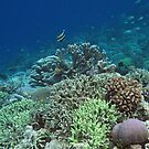 Coral at Wayag II by Reef Ecoimages