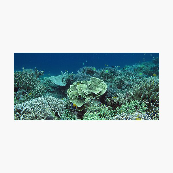 Coral at Wayag I Photographic Print