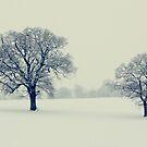 Double frosty by martine fitchett
