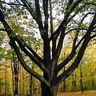 Tree by Shulie1