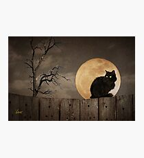 Cat On A Fence Photographic Print