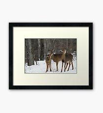 Deer Affection Framed Print