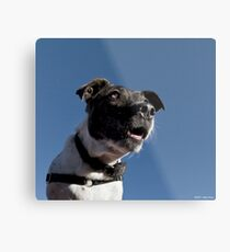 No more treats? I can't believe it!! Metal Print