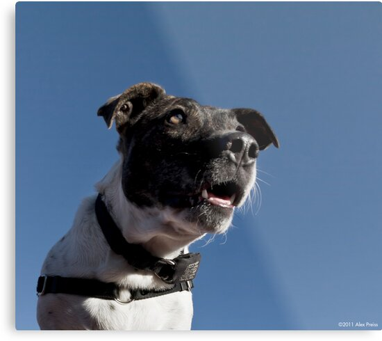 No more treats? I can't believe it!! by Alex Preiss