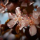 April in Colors by Milena Ilieva