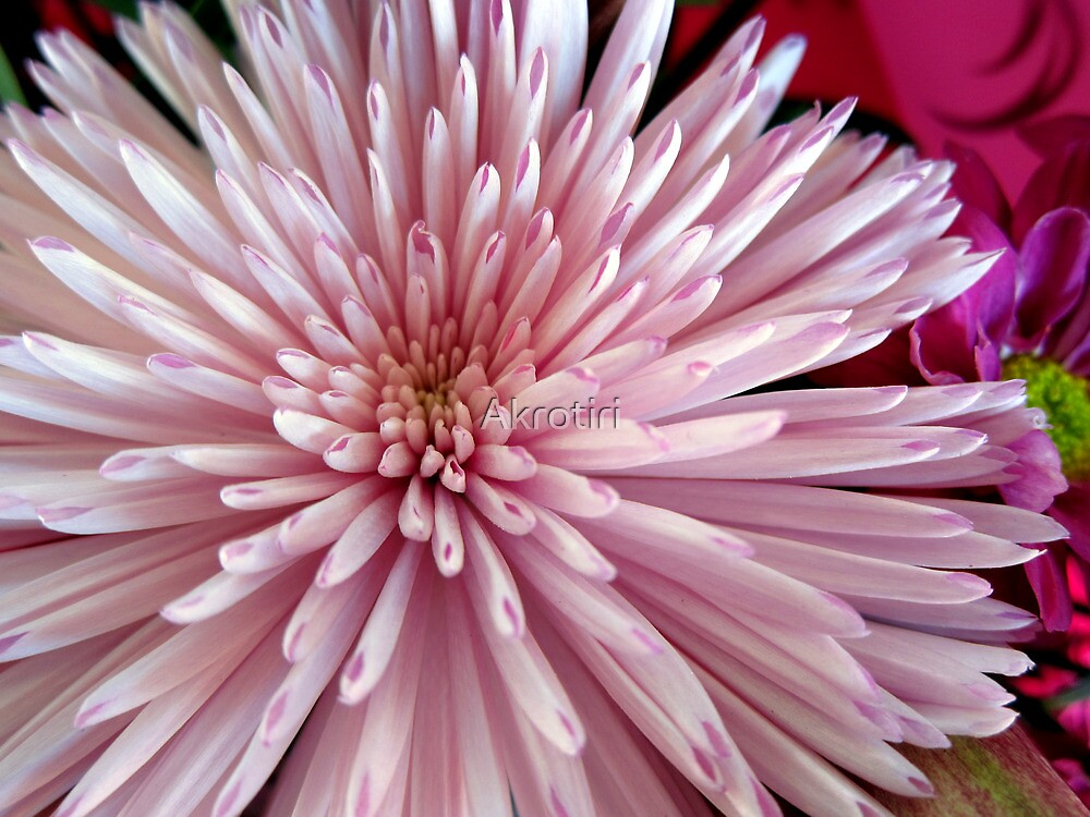 Dignity and elegance by Akrotiri