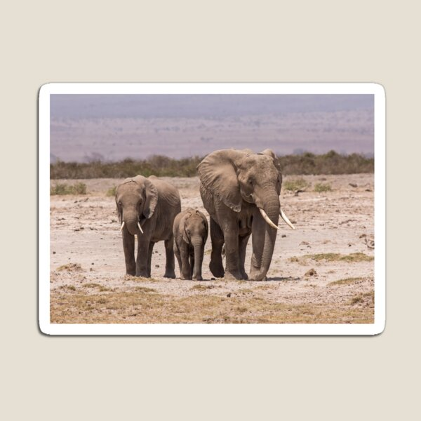 African Elephant Family Magnet