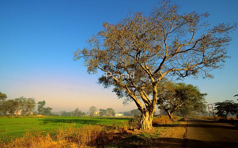 Morning Delight by Prasad