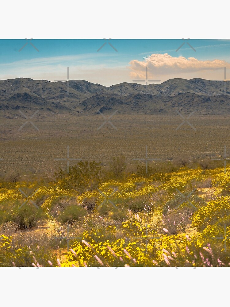Super Bloom Paradise Joshua Tree 7333 by neptuneimages