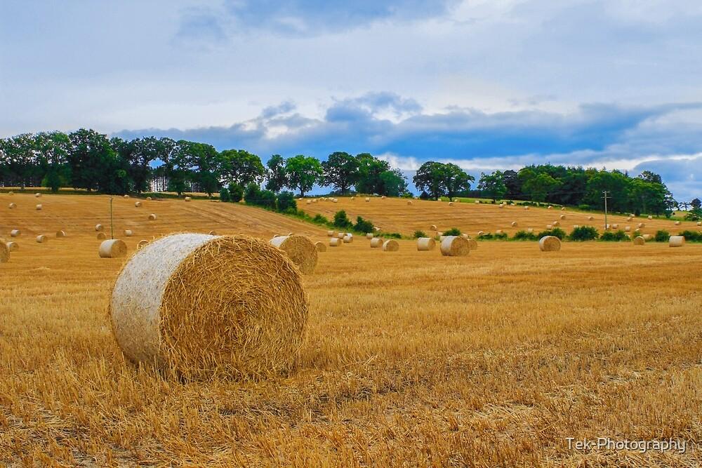 Farmland 2 by Tek-Photography
