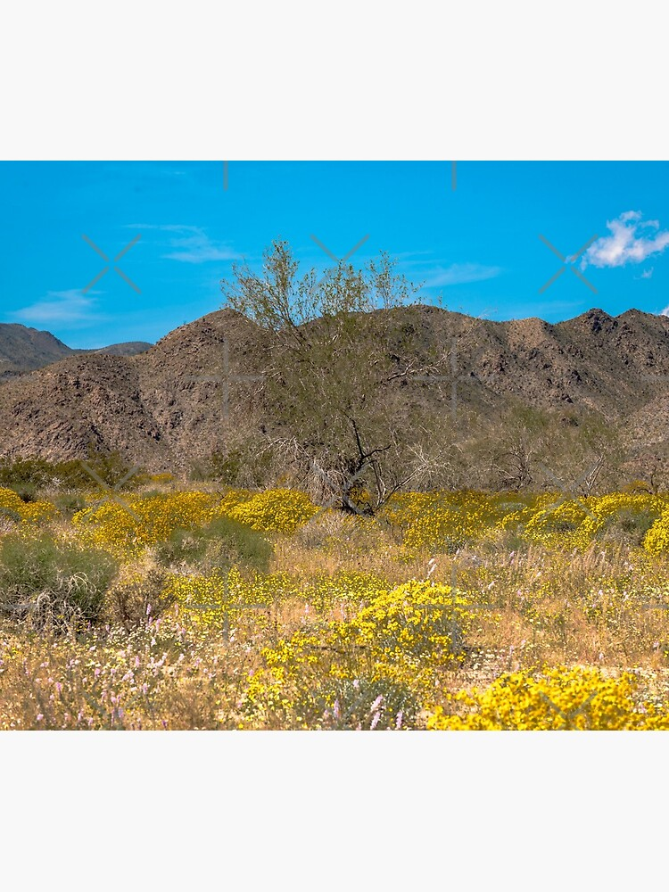 Super Bloom Paradise Joshua Tree 7305 by neptuneimages