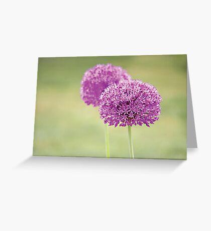 Alliums Greeting Card