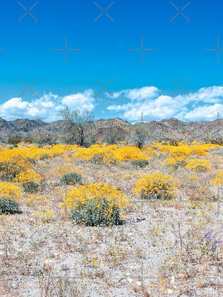 Super Bloom Paradise Joshua Tree 7292 by neptuneimages