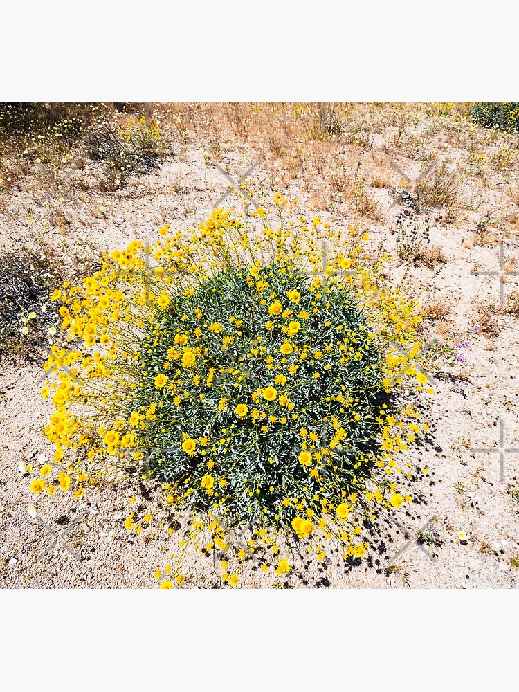 Super Bloom Paradise Joshua Tree 7290 by neptuneimages