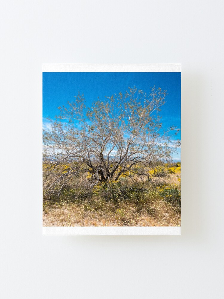 Alternate view of Super Bloom Paradise Joshua Tree 7289 Mounted Print
