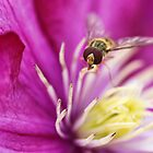 Hoverfly by Aase