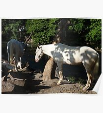 White horses at the River Cuale Poster